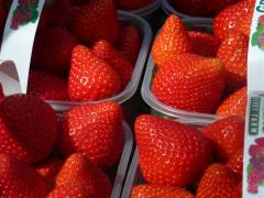 Class 1 Strawberries, Wexford Strawberries