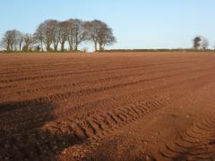 Planting British Queens 1 at Greens Berry Farm Gorey, Wexford, Ireland, Irish Fruit Farm