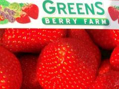 greens-strawberries-punnet-r
