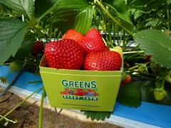 New 400g Pack for sale at Greens Berry Farm Irish Strawberries Wexford Ireland