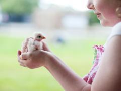 Love Gorey Shrule Farm