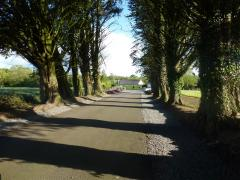 Avenue at Greens Berry Farm Courtown Wexford Ireland