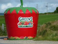 Clough Farm Shop Irish Strawberries for Sale from Greens Berry Farm Gorey Wexford Ireland