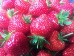 Centenary Strawberries - Greens Berry Farm Wexford Ireland