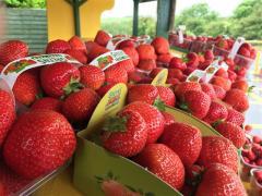 Farm Stall Tinnock, Greens Berry Farm Wexford Ireland