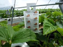 Wexford Fruit Farm Biological Pest Control Irish Fruit Farms Greens Berry Farm Gorey Wexford Ireland