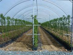 Raspberry Growing System - Wexford Strawberries, Greens Berry Farm Wexford Ireland