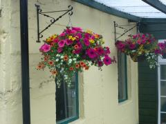 Hanging Baskets at Greens Berry Farm, Courtown Road, Gorey, Wexford, Ireland, Irish Fruit Farm