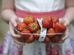 Fresh Punnet Wexford Irish Strawberries from Greens Berry Farm Gorey Wexford Ireland