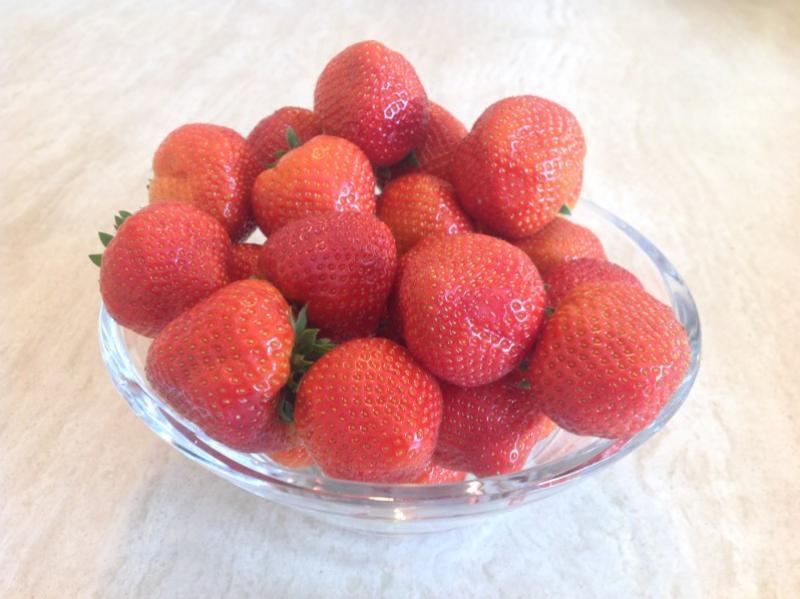 Early Wexford Strawberries grown at Greens Berry Farm Gorey, Wexford, Ireland, Irish Fruit Farm