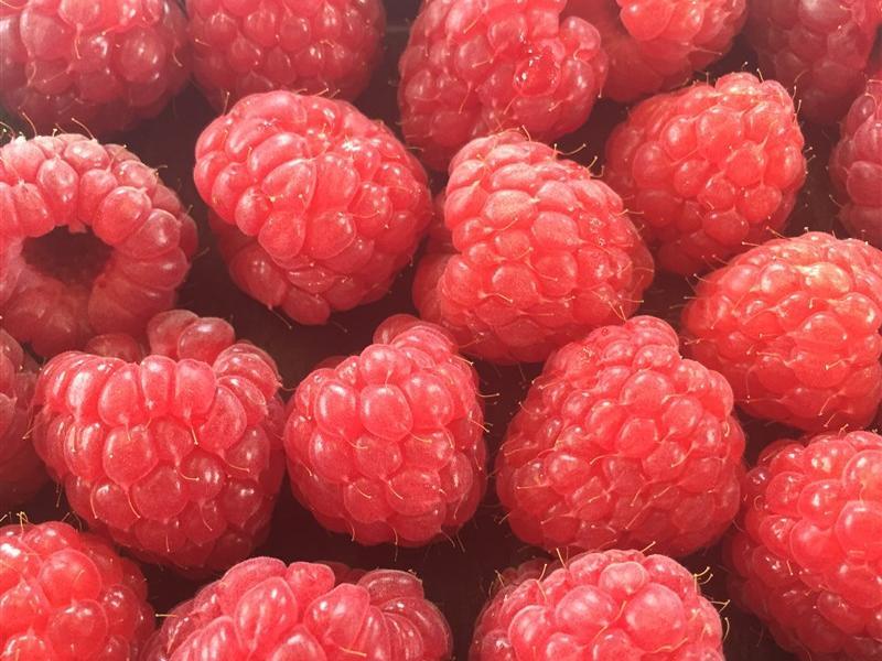 First Raspberries 2016, Wexford Strawberries, Irish Fruit Farm