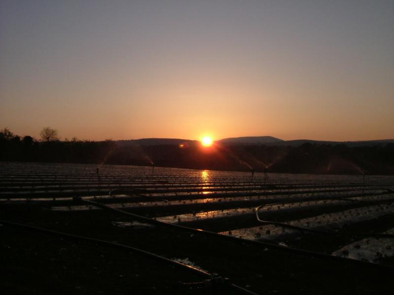 Irrigation at sunset at Greens Berry Farm Gorey, Wexford, Ireland, Irish Fruit Farm