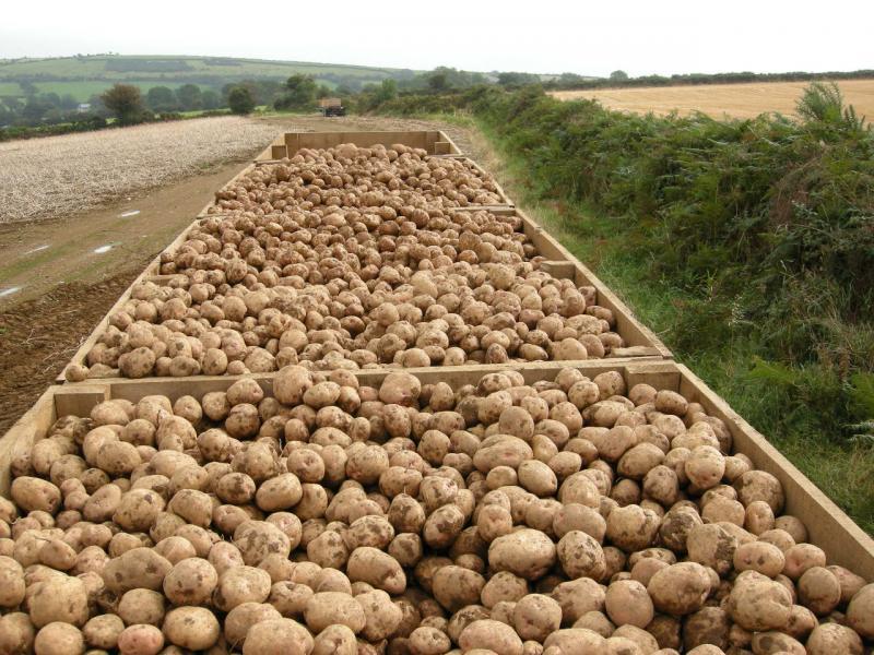 Potato harvest at Greens Berry Farm Gorey, Wexford, Ireland, Irish Fruit Farm