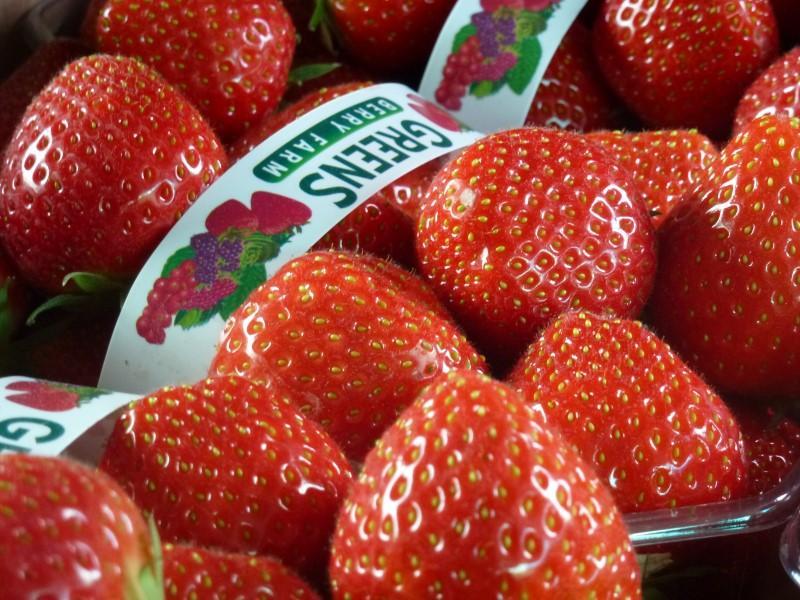 Sweet Sonata Strawberries at Greens Berry Farm Gorey, Wexford, Ireland, Irish Fruit Farm