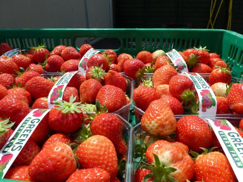 Irish Fruit Fresh Wexford Strawberries Elsanta Greens Berry Farm Gorey Wexford Ireland