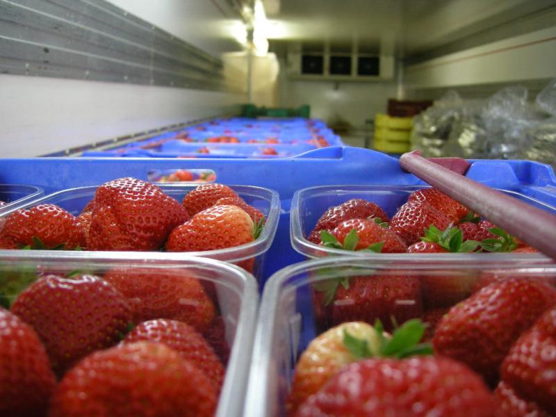 Coldroom for fruit at Greens Berry Farm Gorey, Wexford, Ireland, Irish Fruit Farm
