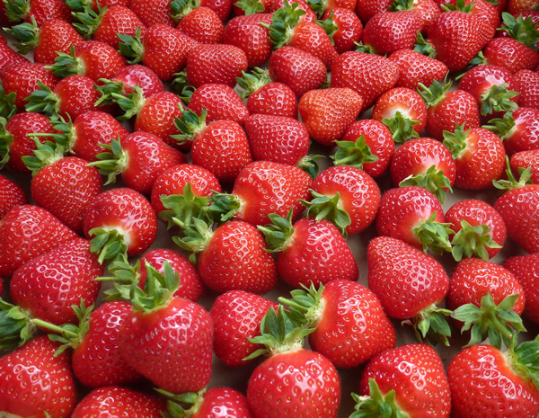 wexford strawberries greens berry farm gorey wexford