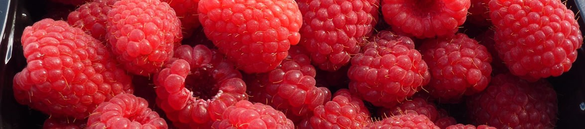 Fresh Raspberries from our Fruit Farm